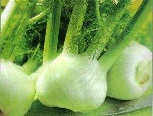 Guía de las verduras, Hinojo | La Guía de las Vitaminas