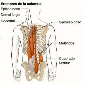 MUSCULATURA-COLUMNA