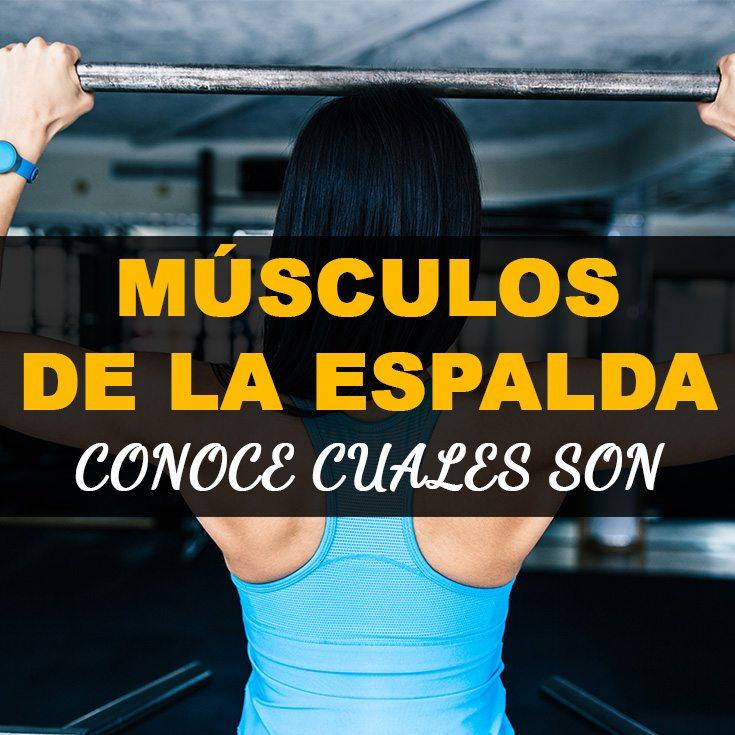 Músculos de la espalda - Conoce cuales son - La Guía de las Vitaminas