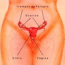 síntomas-de-ovulación