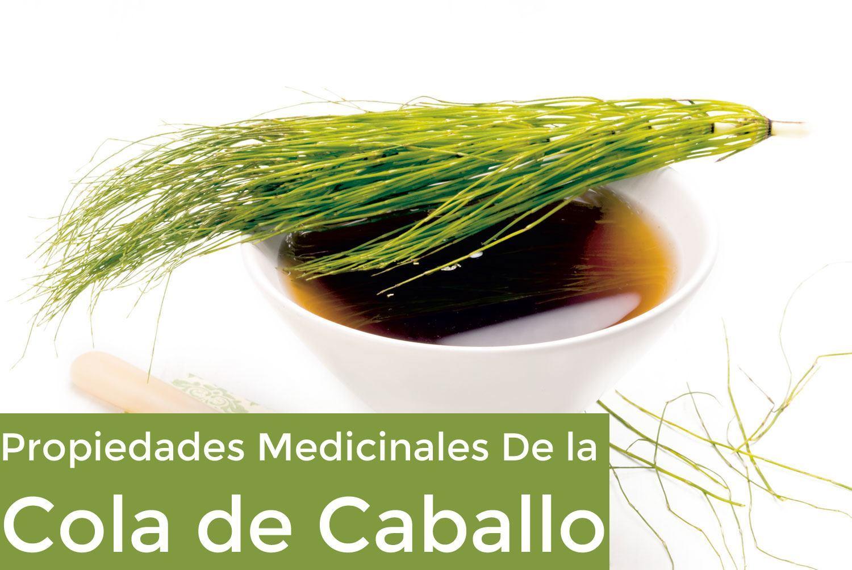 Propiedades Medicinales de la Cola de Caballo
