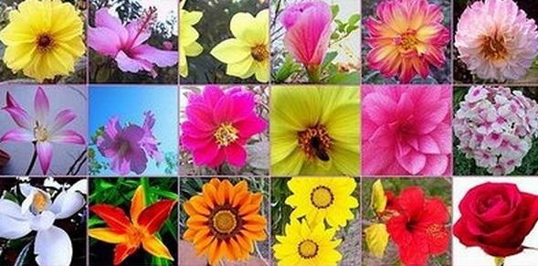 Flores-de-Bach-para-adelgazar-38 esencias florales