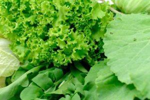 vegetales-de-hoja-verde
