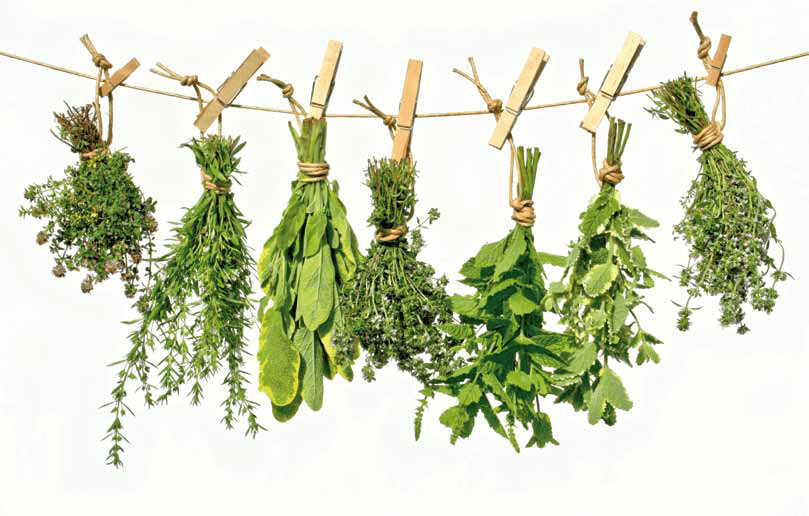 hojas medicinales