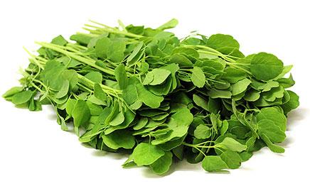 plantas medicinales-pápalo
