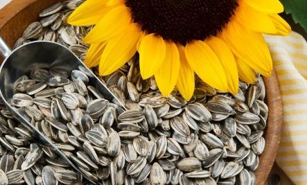 semillas-para-quemar-grasa-6