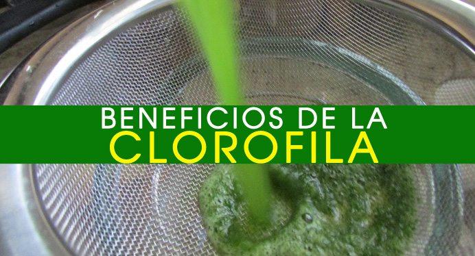 beneficios-de-la-clorofila