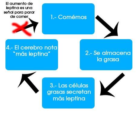 leptina-2