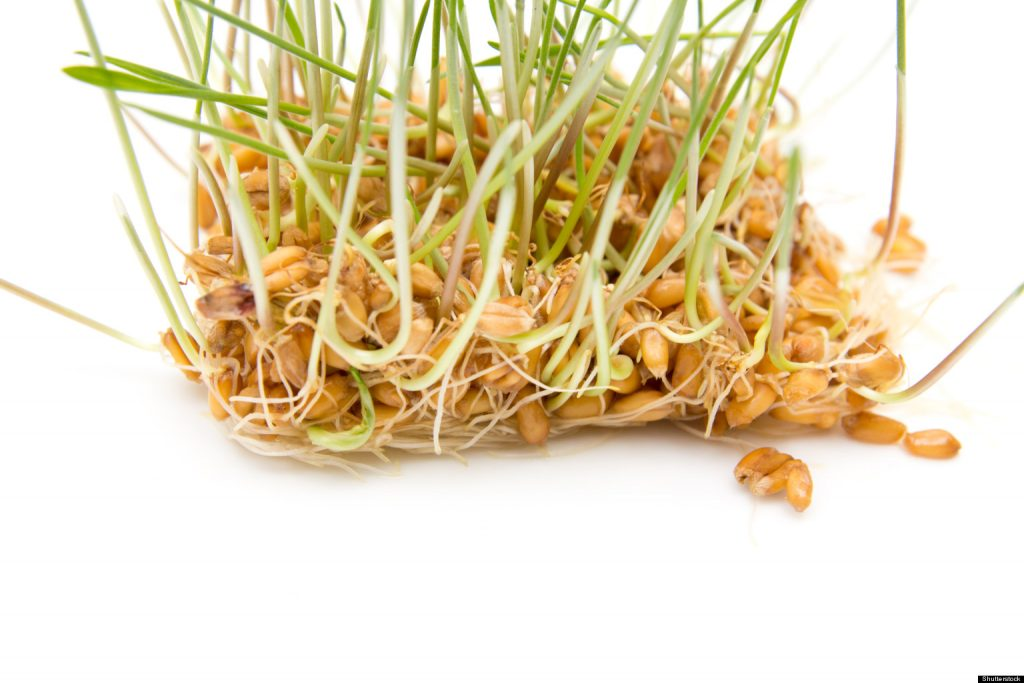 alimentos ricos en fibra-germen de trigo