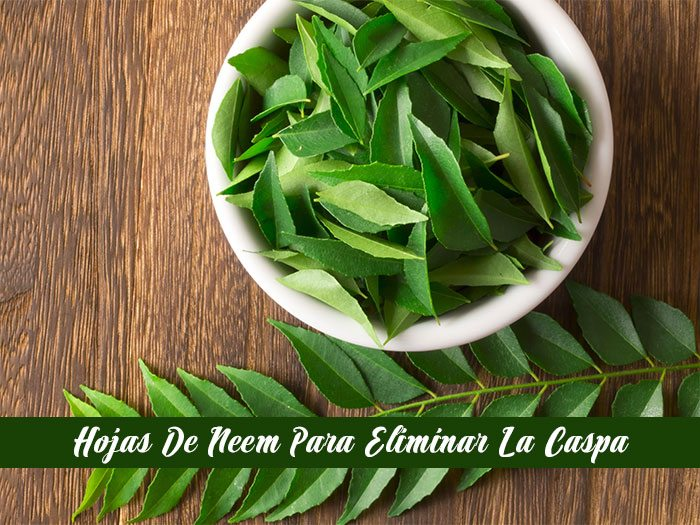 hojas-de-neem-2
