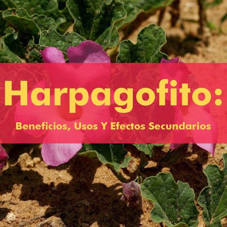 harpagofito-beneficios
