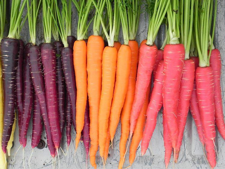 zanahorias-de-colores-morado-naranja-rosa