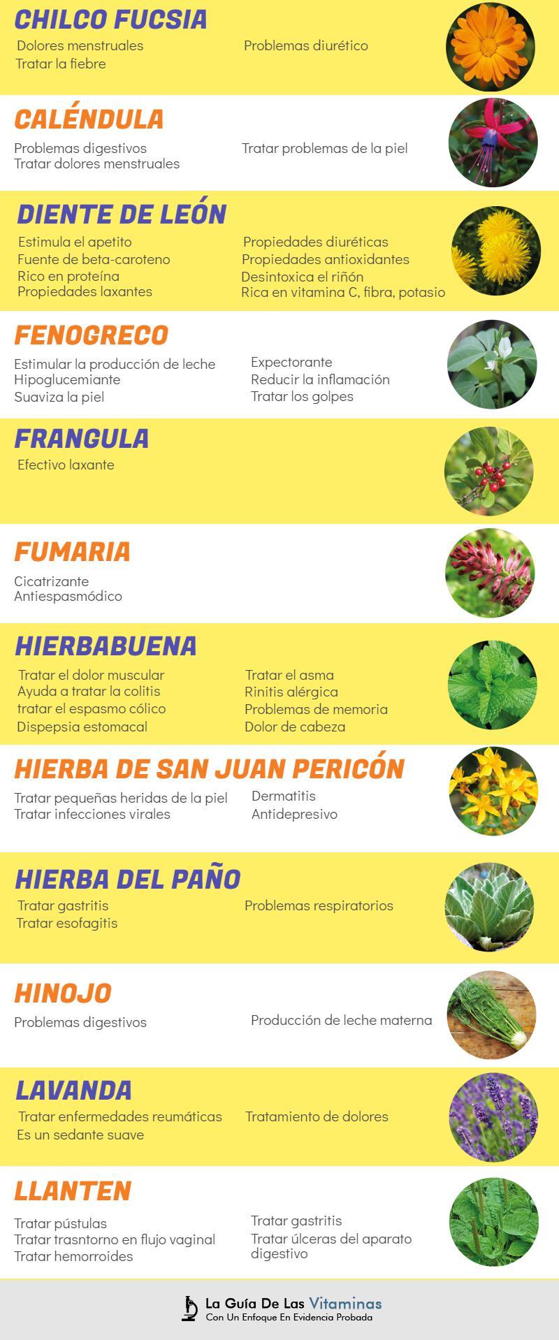 44 plantas medicinales para qu sirven y como cultivarlas for Planta decorativa con propiedades medicinales crucigrama