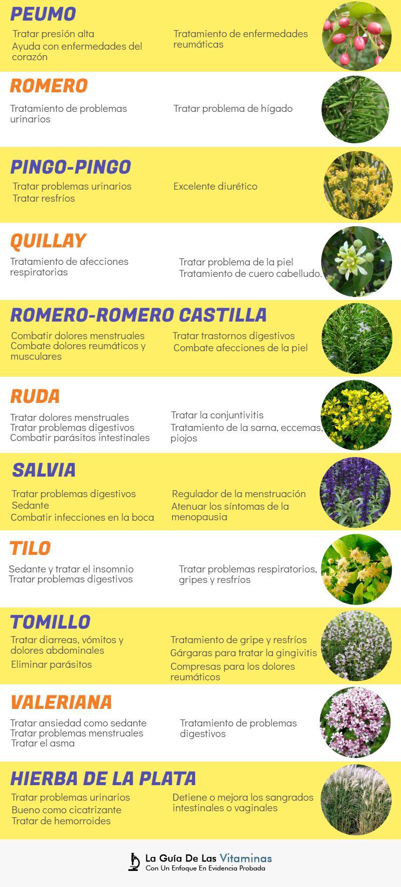 44 plantas medicinales para qu sirven y como cultivarlas for Como se llaman las plantas ornamentales