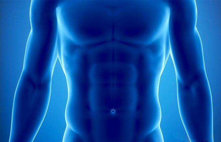 rayos-x-musculos-abdominales