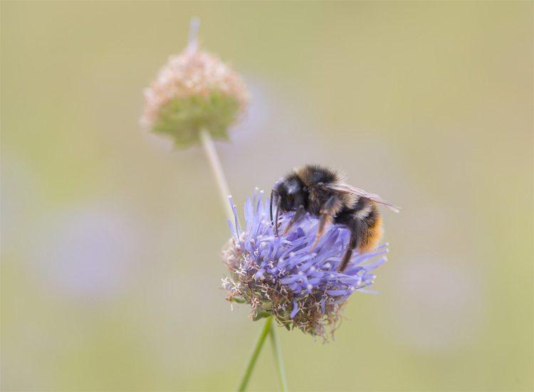 ¿Los Diabéticos Pueden Comer Miel? Las Pruebas Te