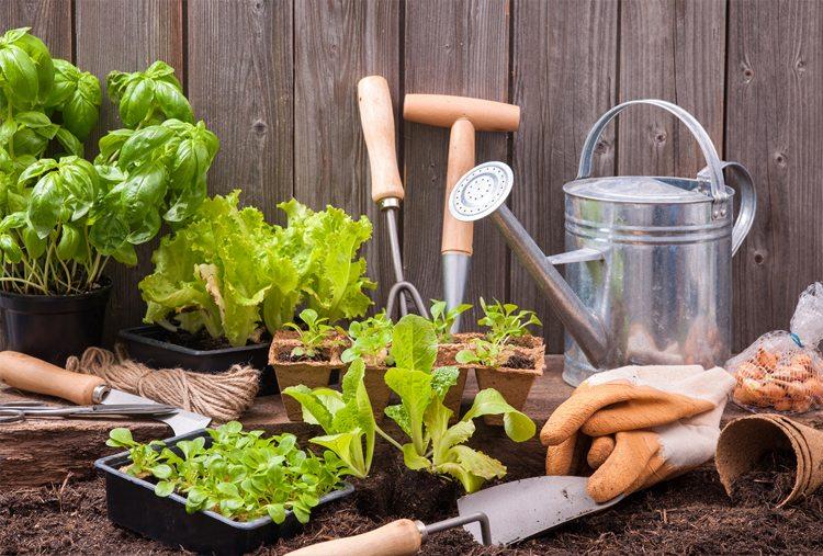 huerto-hurbano-palas-herramientas