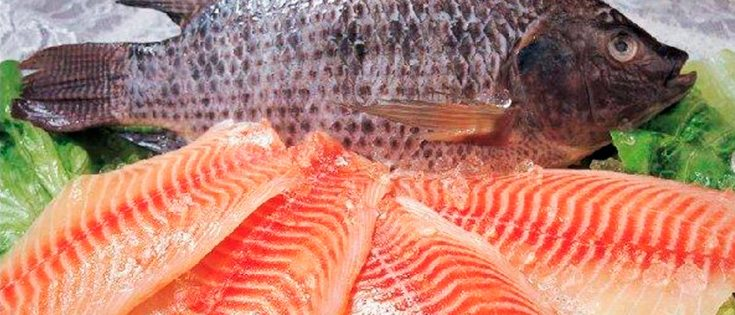 17 tipos de pescados que nunca debes comer y opciones m s for Criadero de pescado tilapia