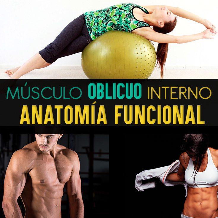 Músculo Oblicuo Interno Del Abdomen: Anatomía Funcional Y Ejercicios ...