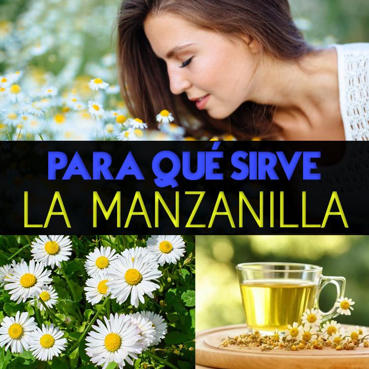 Manzanilla para qu sirve beneficios peligros recetas for Manzanilla planta medicinal para que sirve