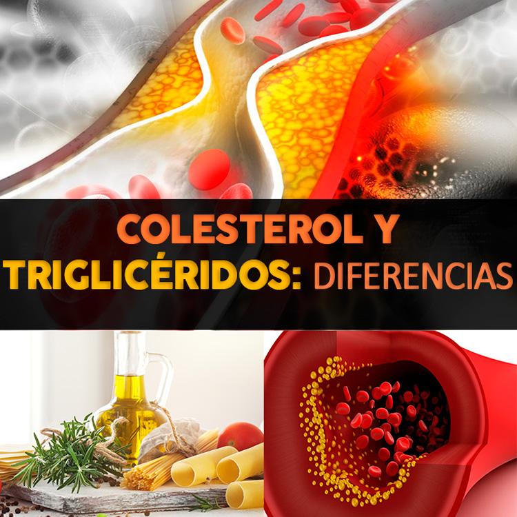 Colesterol y triglic ridos diferencias y similitudes la gu a de las vitaminas - Trigliceridos alimentos ...